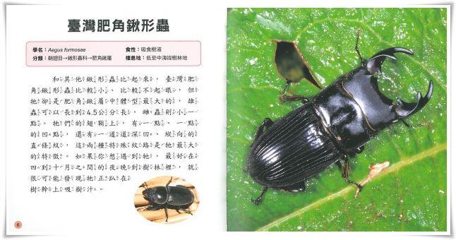 儿童百科6:昆虫小百科