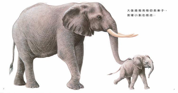 大象 动物 750_394